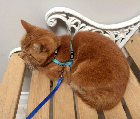cat-vet-trip-2016